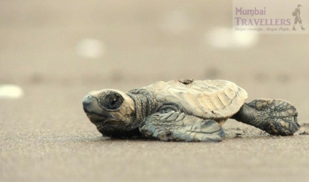 turtle-festival-velas-2